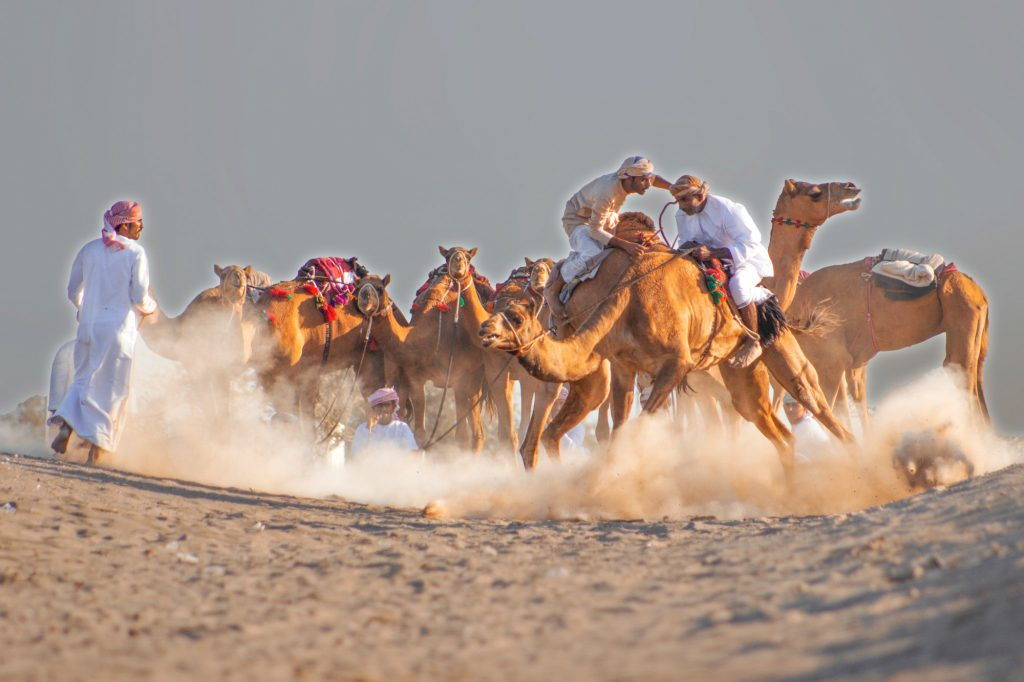 Oman camel riding
